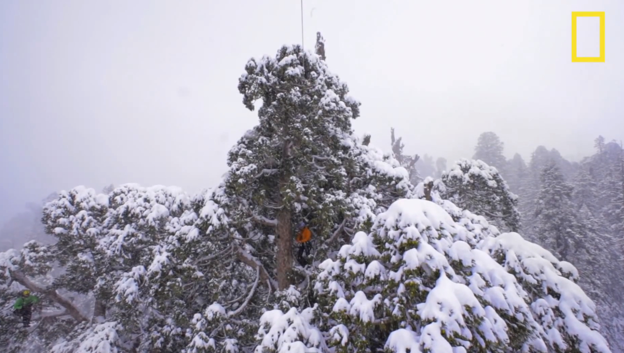 Pohon Berusia 3.200 Tahun Ini Sangat Besar sehingga Butuh 126 Foto Untuk Mengabadikannya