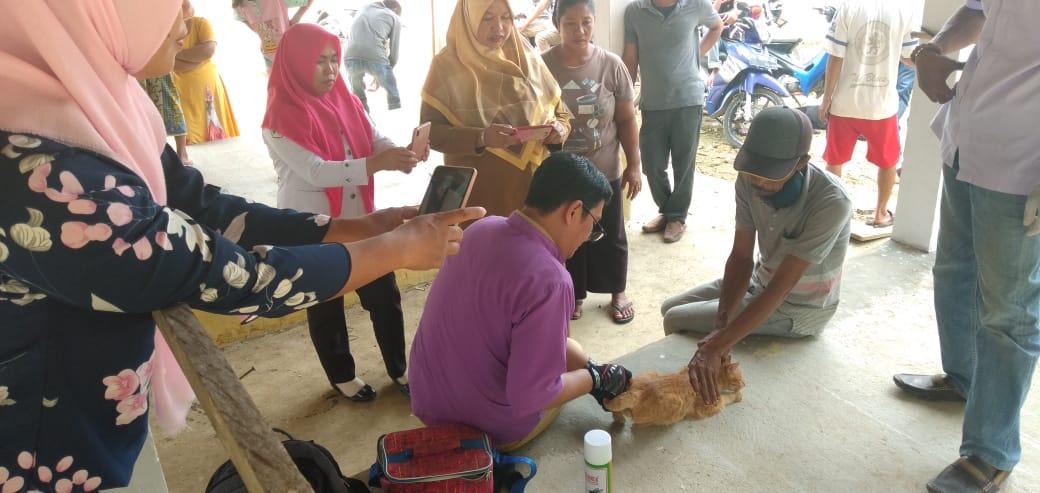 Kasus Gigitan Anjing tahun 2019 di Bone Mencapai 418 Kasus, 5 Diantaranya Meninggal Dunia