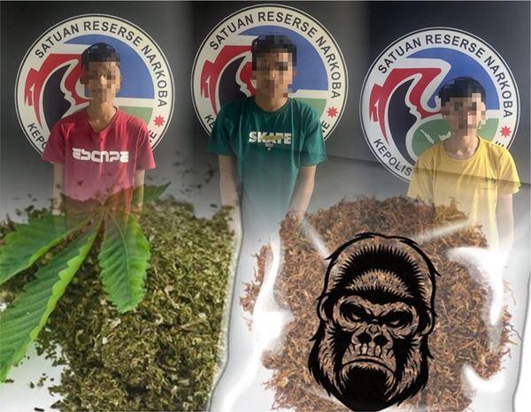Tiga Pelaku Narkotika Golongan 1 di Ringkus Sat Narkoba Polres Bone
