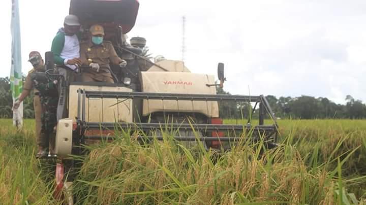 Bupati Bone Lakukan Raya Padi di Desa Samaelo Kecamatan Barebbo