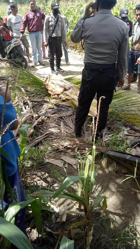 Warga Desa Tajong Digegerkan Penemuan Mayat tergantung di Pohon Mangha