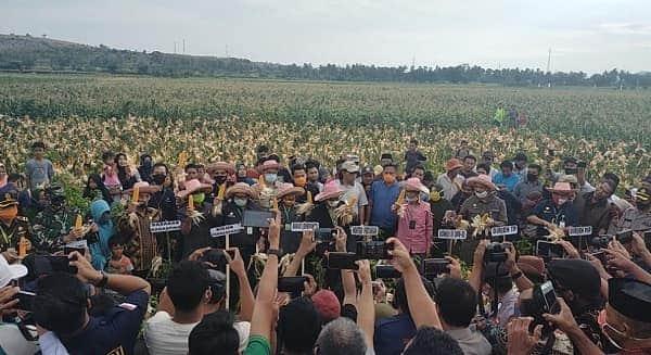 Kunjungan Kerja, Mentan SYL Panen Raya Jagung Kuning di Jeneponto