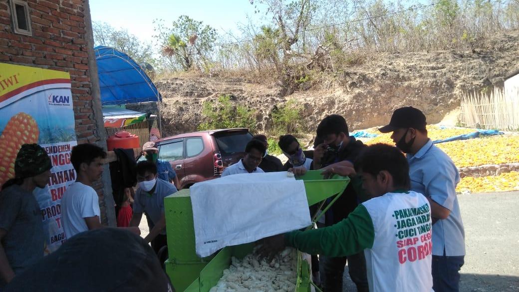 Bersama PT Agri Makmur Pertiwi, Dinas Pertanian Jeneponto Panen Raya Jagung Kuning Musim Kemarau