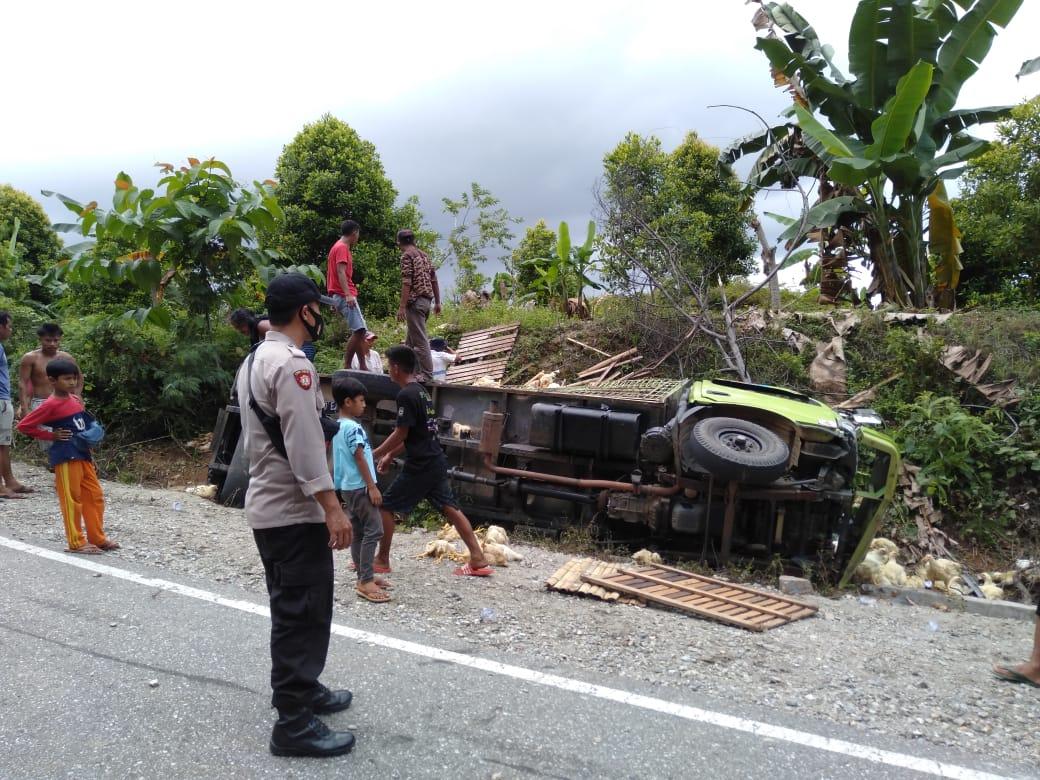 REM BLONG, Truck Beruatan 1230 Ekor Ayam Potong Asal Wajo Terguling di Kolaka Utara