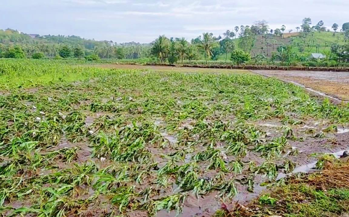 Usai diterjang Banjir, Ribuan Hektar Lahan Pertanian di Jeneponto Rusak Parah
